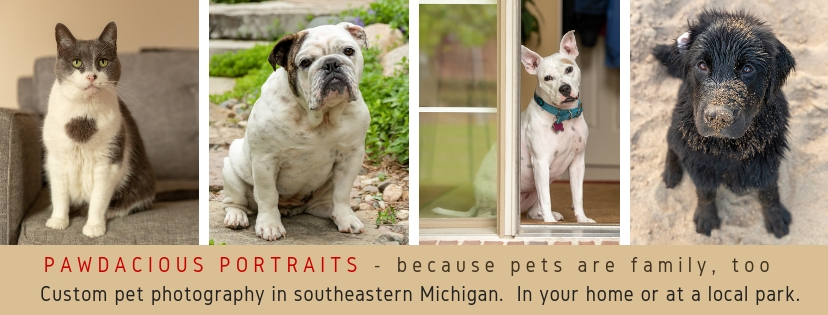 Pawdacious Portraits Facebook cover location summer.jpg