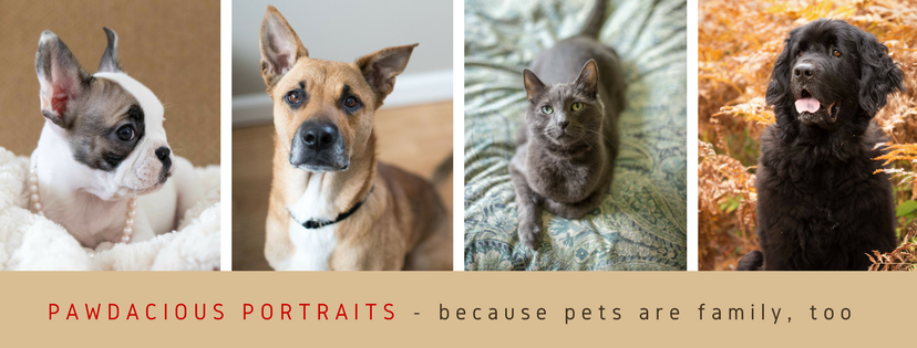 Pawdacious Portraits Facebook cover revised.png